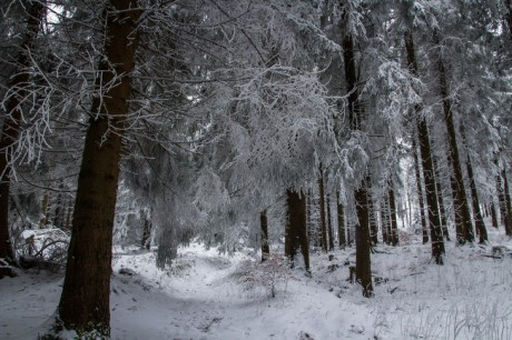 2015-01-25 Winterspaziergang 11