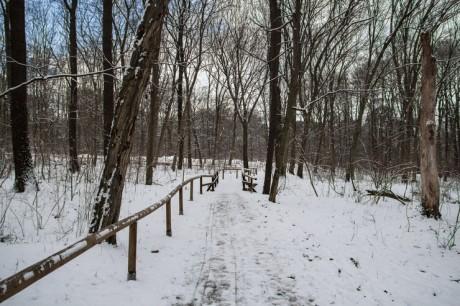 2016-01-17 Winterwanderung 03