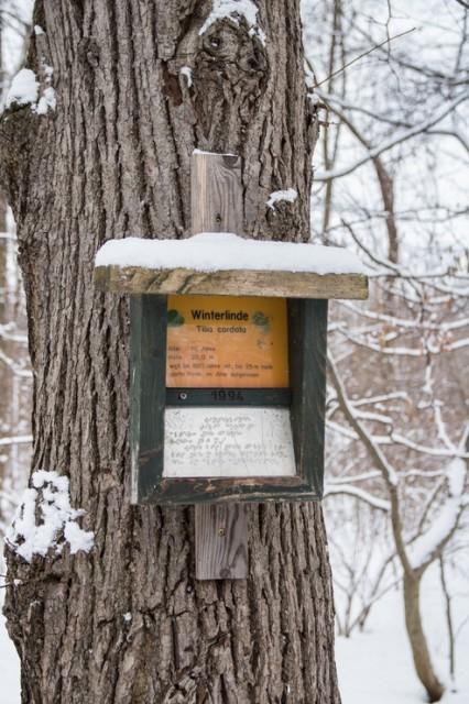 2016-01-17 Winterwanderung 04